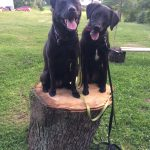 Two Dogs on a Log