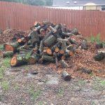 Pile of Smaller Logs for Hügelkultur